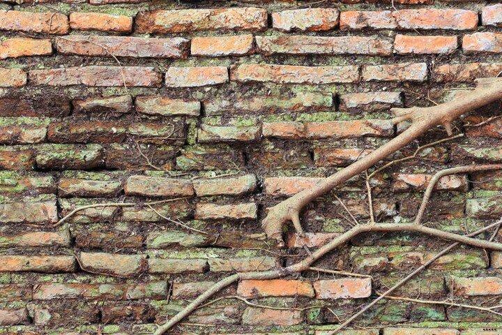 Какие деревья опасно сажать около дома? ФОТО ПОСЛЕДСТВИЙ!